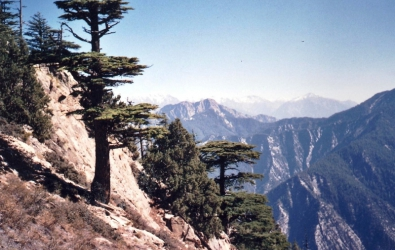 Hiking up the Gambak pass between Bumboret and Rumbur Pakistan these hills ahve been badly deforested and cedars will take hundreds of years to regrow
